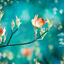 teal flowers teal photography orange teal decor flower aqua blue