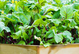 the best soil for a raised bed garden planet natural
