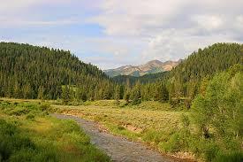 Wyoming forest images Wyoming photos wyoming range photos pictures nature wildlife prints jpg