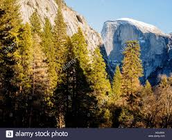the iconic bulk of half dome rises above trees in the yosemite