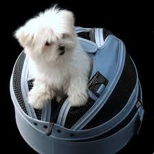 Comfort Pet Certification 42 Best Pet Safety First Images On Pinterest Safety Dog Harness