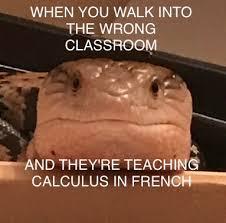 lizard memes by miidnightforest on deviantart