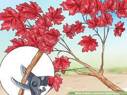 4 ways to make a japanese maple bonsai tree wikihow