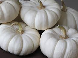 white pumpkins 15 hacks for growing white pumpkins