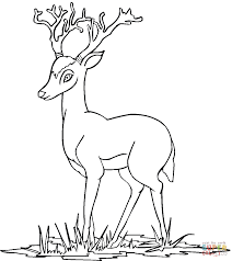 young deer coloring page free printable coloring pages