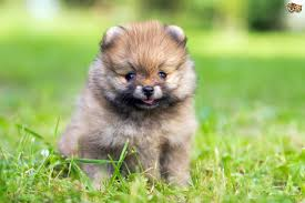 Types Of Dogs Small Dog Breeds Different Of Dogs Cute Little With Pictures