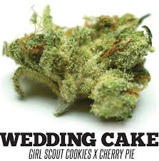 wedding cake og strain of the month wedding cake northwest leaf the patients voice