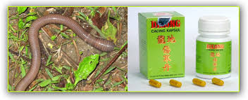 Obat Kapsul Cacing Tanah animazing wildlife cacing kalung pheretima aspergillum penurun demam