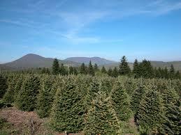 christmas tree farms christmas lights decoration