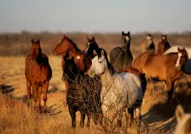 Texas Travel Info images Pure western american heritage in n texas horse country tour texas png