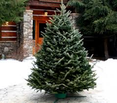 live christmas trees plum district 20 all purchases great deals on christmas