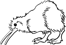 kiwi bird coloring page kiwi is looking for food coloring page