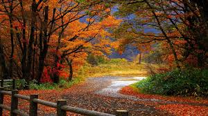 thanksgiving themed wallpaper fall themed desktop backgrounds 38 wallpapers u2013 adorable wallpapers