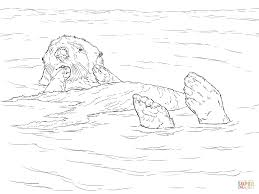 sea otter coloring pages sea otter floating coloring page free