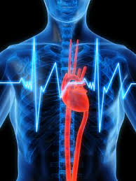 Calculate Your Max Bench Max Heart Rate How To Calculate Your Maximum Heart Rate