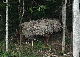 what can native australian plants teach us about business new photos of uncontacted amazon tribe stir uproar