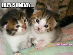 Sunday Meme - on sunday kittens are lazy funny kitten meme