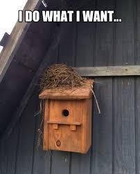I Do What I Want Meme - because i do what i want