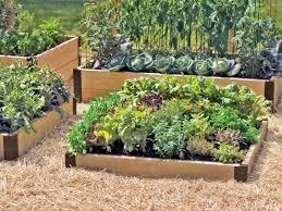 Best Vegetable Garden Layout by Garden Ideas Beautiful Raised Garden Bed Design Raised