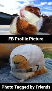 Profile Picture Memes - funny fb profile picture meme and lol meme lol funny humor