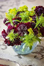 Indoor Plants Arrangement Ideas by 89 Best Flowers And Indoor Plants Images On Pinterest Flowers