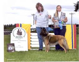 belgian sheepdog national specialty 2014 i c tail wagging dogs