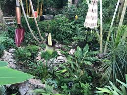 stinky corpse flower is finally blooming whotv com