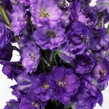 delphinium flowers designer delphinium flower