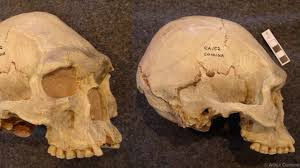 How Many Bones Form The Cranium Bbc Earth Why Early Humans Reshaped Their Children U0027s Skulls
