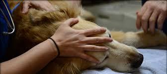 pet euthanasia euthanasia service oak view animal hospital