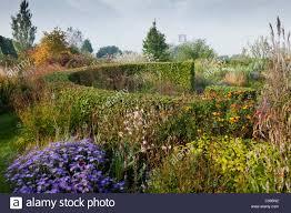 marchants sussex ornamental grass autumn fall october garden plant