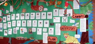 fourth grade curriculum ecuador rainforest alliance