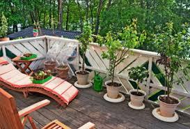 balkon grã npflanzen balkonpflanzen kauf pflege winter wie sommer