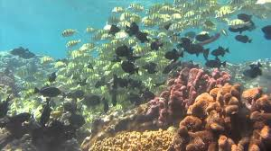diving at flying fish cove christmas island march 2012 youtube