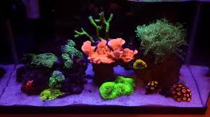 led lights for coral tanks diy led light diffuser diy nano protein skimmer 10 gallon reef