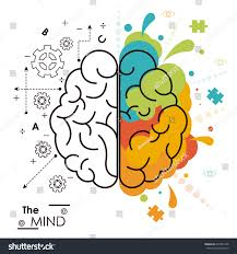 brain anatomy coloring book mind brain human functions left right stock vector 629361458