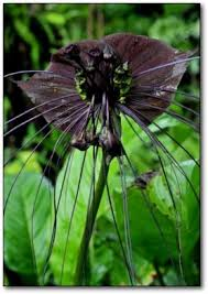 12 Best Plants That Can by 10 Creepy Plants That Shouldn U0027t Exist
