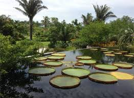 Naples Florida Botanical Garden Boaler A Trip To Naples Botanical Garden Ohio