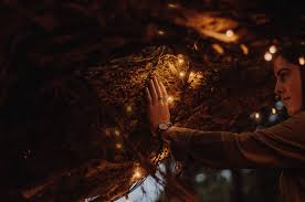Fairy Light Tree by Free Images Watch Hand Tree Night Fire Darkness Fairy