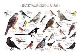 Utah Birds images Backyard birds of utah field guide art print handmade jpg