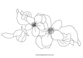 fiori disegni fiori di melo disegni da colorare
