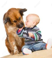 Floor Hand by Faithful Family Dog Gently Licking The Hand Of A Cute Baby As