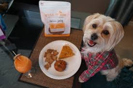 a paw fect thanksgiving feast with moon treats rambo the puppy
