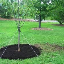 tree stakes stake it easy tree staking kit the shrub coat