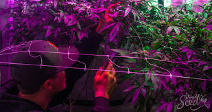 9 tips on keeping your grow room as discrete as possible