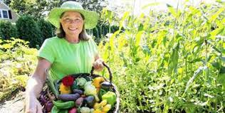 Vegetable Garden Preparation by Covertress Vegetable Gardening Soil Preparation