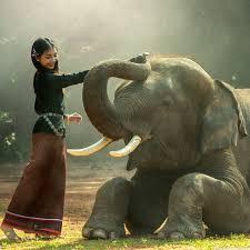 apple wallpaper elephant elephant training 4k hd desktop wallpaper for 4k ultra hd tv