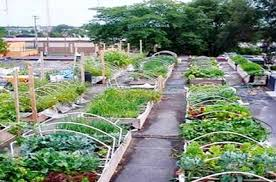 india assam government to promote roof top vegetable gardening in