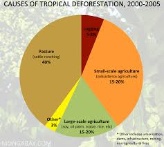Dominant Plants Of The Tropical Rainforest - the tropical rain forest