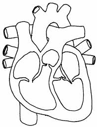 human heart diagram without labeling human heart drawing with